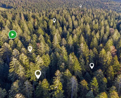 Nicht die Studierenden werden wie üblich in den Wald gebracht, sondern umgekehrt, der Wald kommt zu den Studierenden. Auf digitale Weise wird er den Studierenden zugänglich macht: warum nicht auch einmal mit 3D-Brille?