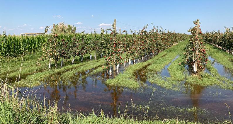 Das können deutsche Landwirte von Spanien lernen: Wissenschaftler der TH OWL untersuchen mit modernster Technik Luftfeuchtigkeit, Windgeschwindigkeit und Temperatur auf spanischen Anbauflächen